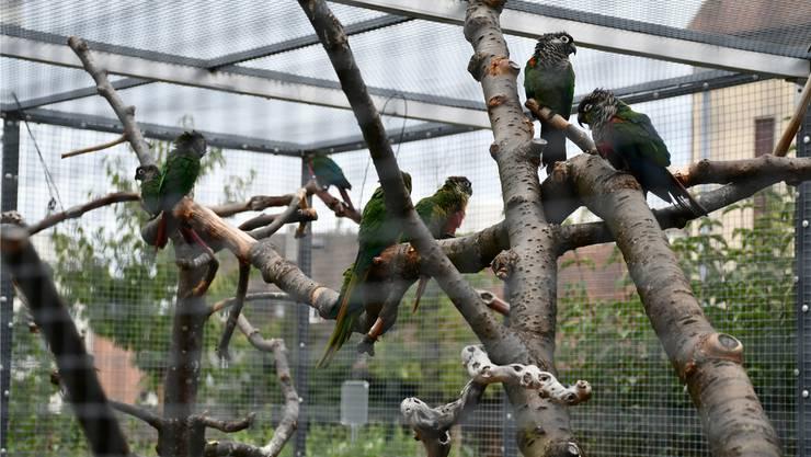 Die Vogelvoliere wurde komplett erneuert und mit verzweigten Ästen ausgestattet.