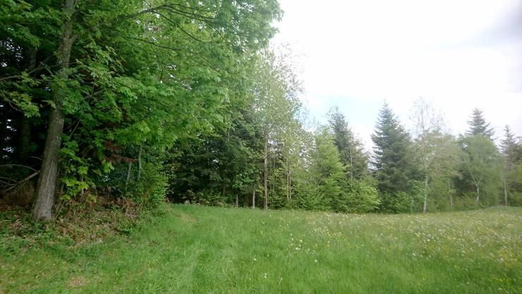 In diesem Waldabschnitt dominieren die Buchen. Ihre Blätter verfärben sich bis zum Herbst, so dass ein Farbenparadies der speziellen Art entsteht.