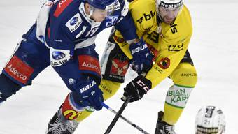 Das zweite Halbfinal-Spiel zwischen den ZSC Lions und Bern war hart umkämpft. Am Ende setzten sich die Berner mit Luca Hischier (im Bild rechts) gegen die Zürcher mit Reto Schäppi (links) durch