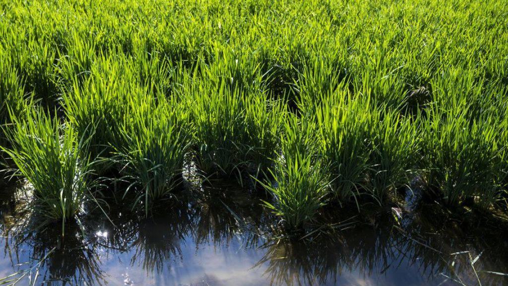 Pflanzen sparen Energie, indem sie Quanteneffekte eliminieren