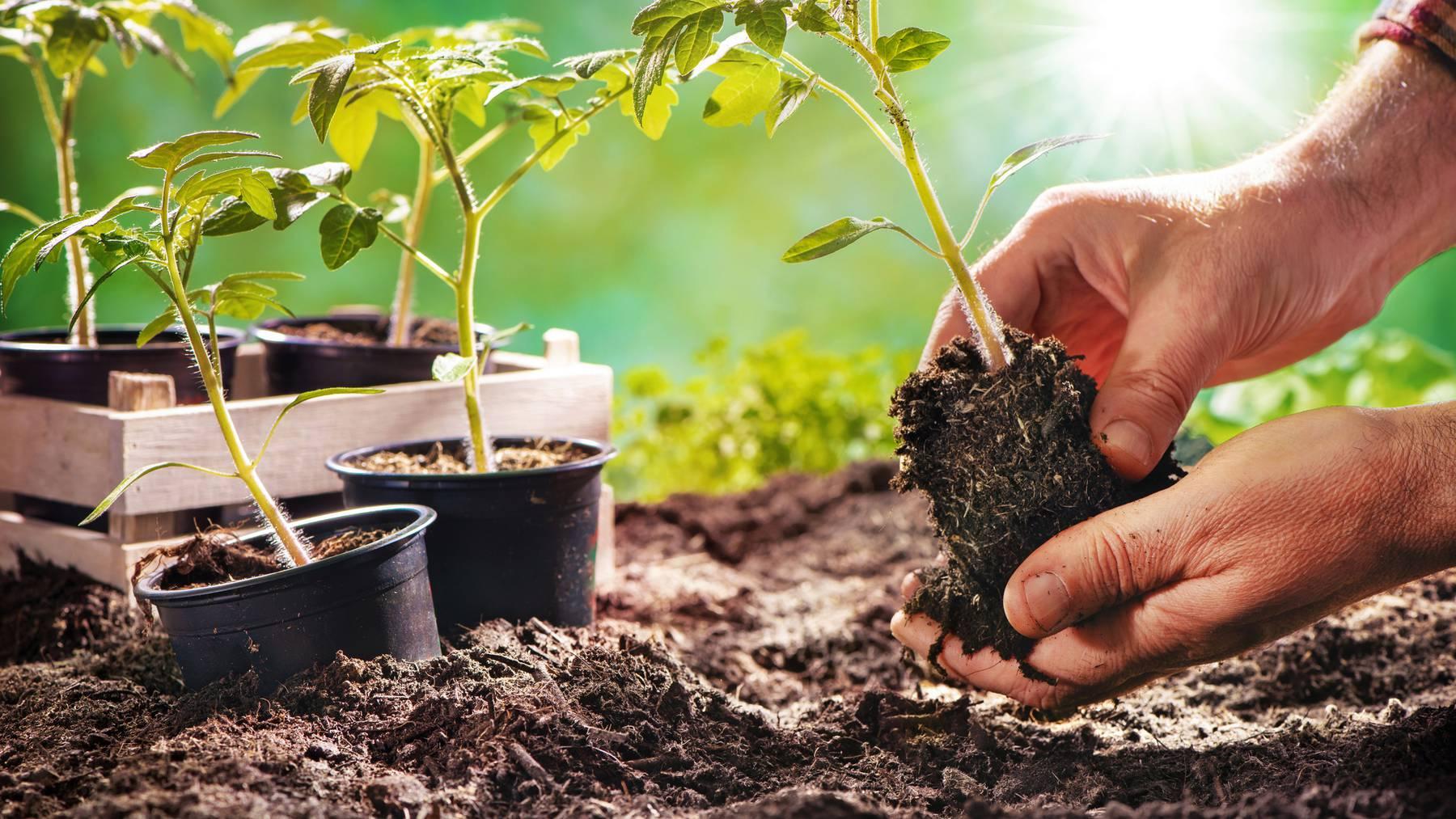 Wer auf sein Glück vertraut, kann auch schon vor den Eisheiligen den Garten machen.
