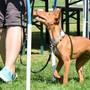 Die meisten behinderten Hunde am «Handicap-Day» sind taub, blind oder gehen auf drei Beinen. zvg