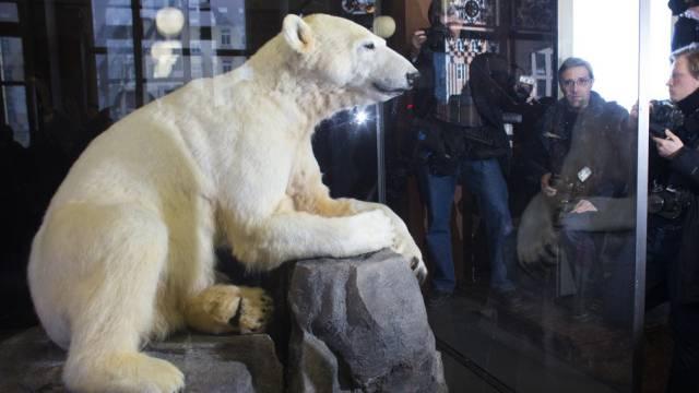 Das Präparat von Eisbär Knut geht auf Reisen (Archivbild)