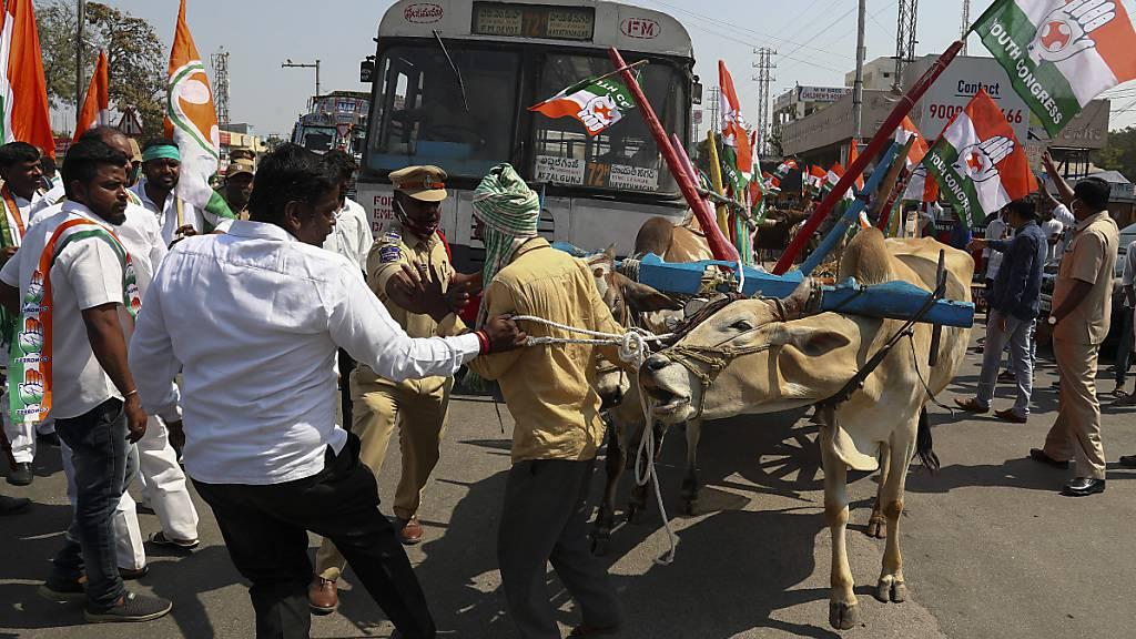 Aktivisten der Kongresspartei bringen einen von einer Kuh gezogenen Wagen auf eine Fahrbahn. Protestierende Bauern haben am 06.02.2021 dazu aufgerufen, Autobahnen für drei Stunden im ganzen Land zu blockieren. Sie fordern die Aufhebung neuer Landwirtschaftsgesetze. Foto: Mahesh Kumar A/AP/dpa