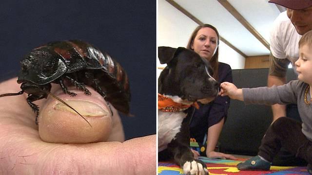 Listenhund als vierbeiniger Therapeut / Insekten-Futter für Zootiere