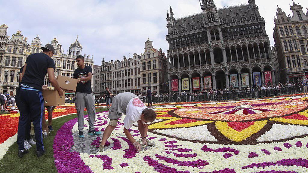 Ein Blumenteppich ziert den historischen Marktplatz in Brüssel.