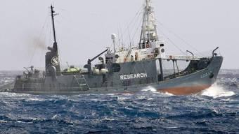 Bei der Waljagd in der Antarktis wurden über 260 Tiere getötet (Archiv)