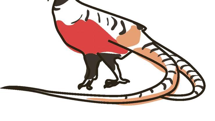 Vorschlag von China: der Artenschutz soll strenger werden. Laut der Roten Liste existieren in der Wildnis noch maximal 9999 erwachsene Individuen der Vogelart. In den letzten Jahren schrumpften die Populationen.