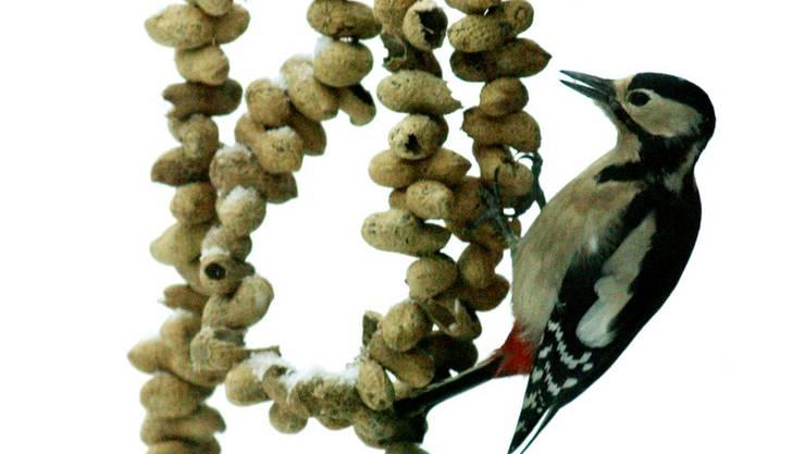 Nüsse sind nicht nur für Vögel gut, sondern auch fürs menschliche Hirn.