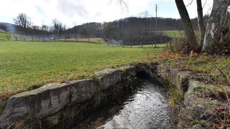 Geplante Renaturierungsmassnahmen nach Überflutungen des Mühletäli-Bach in Olten