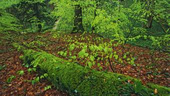 Naturpark Sihlwald