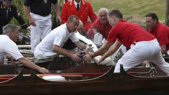 Königliche Schwanenmarkierer: Die Schwanenzähler der britischen Königin sind wieder fünf Tage lang auf der Themse in Grossbritannien unterwegs.