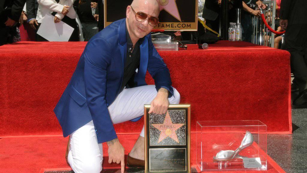 Pitbull mit seinem Stern.