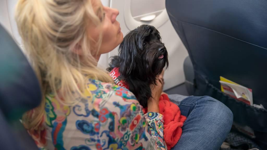 Helsinki führt Flughafentoiletten für Tiere ein