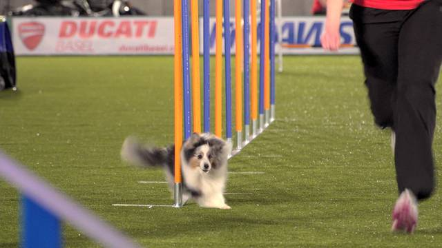 Champdog Show Games