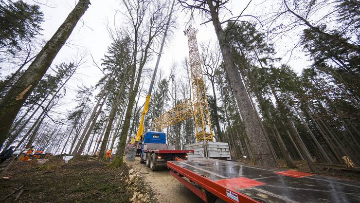 Die Uni Basel untersucht mittels grossangelegtem Waldexperiment Auswirkungen des Klimawandels