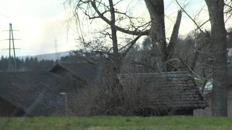 Sturm Sabine machte auch vor Bäumen nicht Halt. (Archivbild)