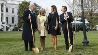 US-Präsident Donald Trump hat seinen französischen Kollegen Emmanuel Macron im Weissen Haus empfangen – gemeinsam mit ihren Gattinnen pflanzten die Präsidenten unter anderem eine Eiche.