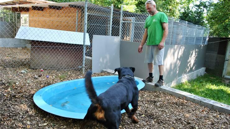 Karl Güntert gönnt Feriengast Lennox eine Abkühlung. «Das ist an heissen Tagen besonder s wichtig», sagt der Leiter der Tierpension Röti. Nadine Böni