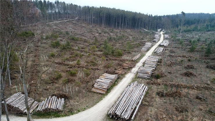 Das Gebiet Stelli in Kestenholz im April 2019. Vor «Burglind» stand hier dichter Wald.