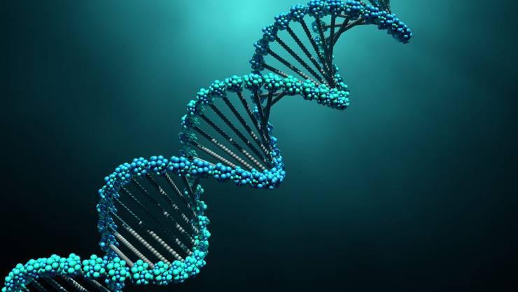 Der Corona-Test vervielfältigt Virus-RNA und macht sie sichtbar.