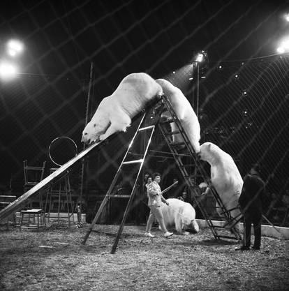 Selbst Eisbären sind im Zirkus Knie zu sehen, aufgenommen im März 1965 in Rapperswil.