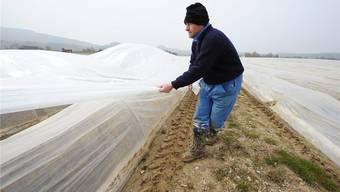 Wärmeschutz für Spargeln in Flaach ZH: Die Gemüseproduzenten hoffen auf bessere Zeiten.KEYSTONE