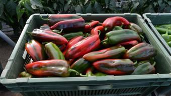 Pestizid-Rückstände können auf importierten Lebensmitteln in die Schweiz kommen.