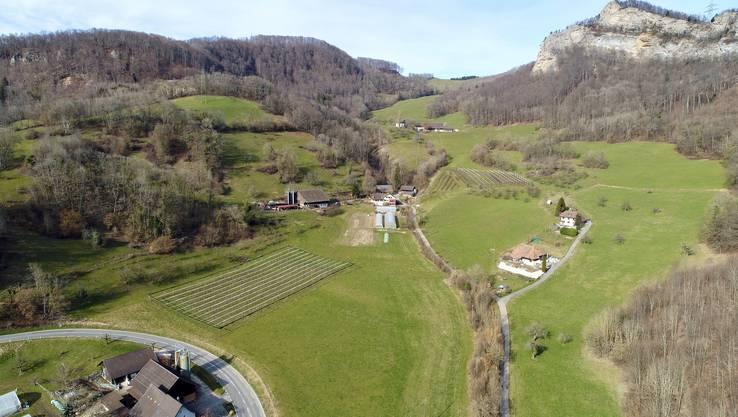 Die Absturzstelle auf dem Feld zwischen der Obstplantage und der Erlimoos-Strasse aus heutiger Ansicht.