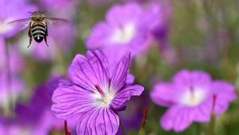 Auf dem Land von Biobetrieben ist eine viel grössere Artenvielfalt zu beobachten (Symbolbild)