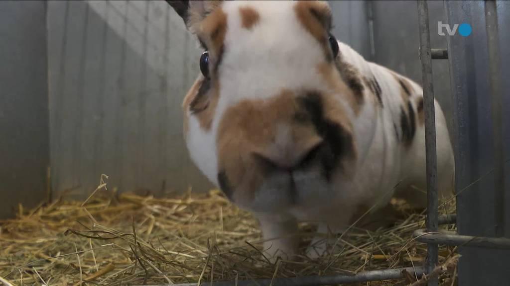 Körperbau und Krallen: Welches Kaninchen ist das schönste?
