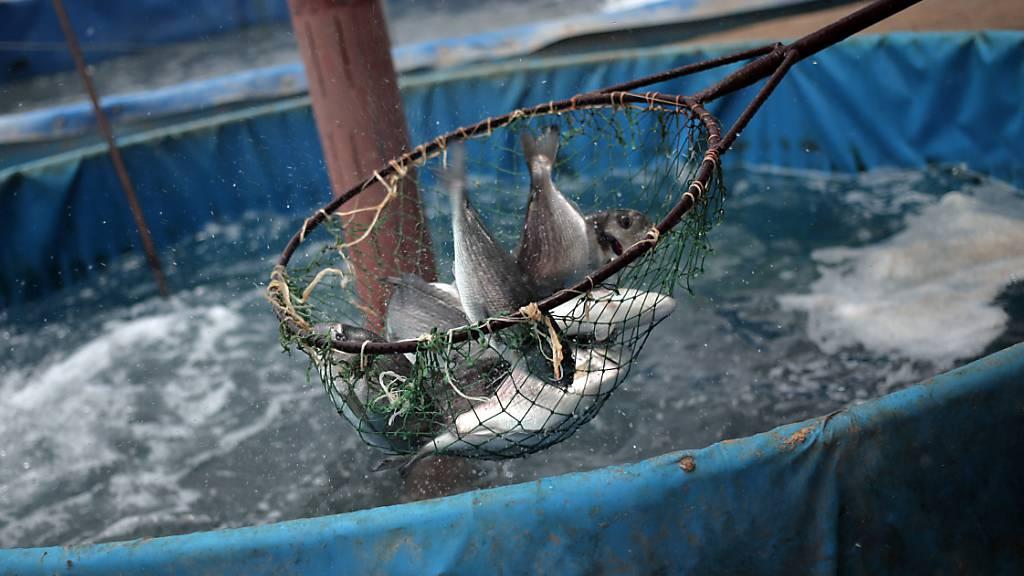 Unbekannte stehlen 700 Kilo Fisch aus Zuchtbetrieb