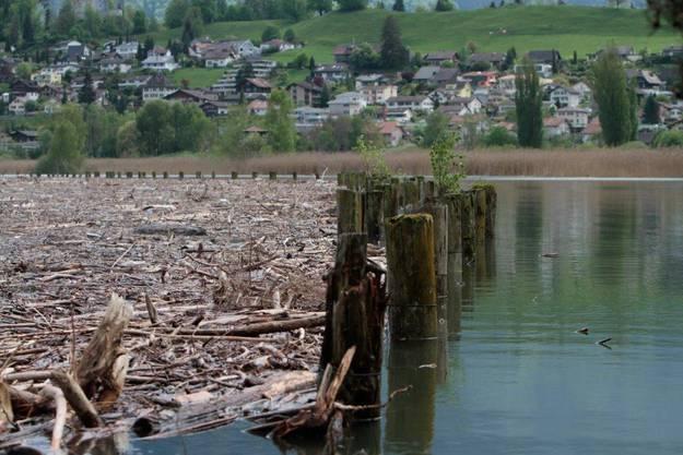 Der Thunersee führt viel Schwemmholz mit sich.