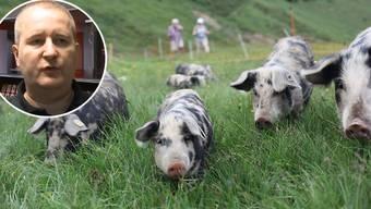 Bei der Sammelaktion des Hilfswerks Margrit Fuchs Ruanda kann man Geld oder Tiere spenden. Vom Aarauer Münzen Huber kam eine Spende von 100 Schweinen.
