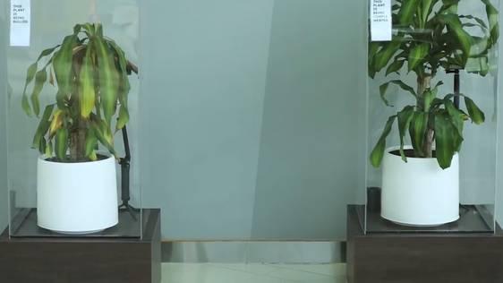 Spüren Pflanzen Mobbing? Ikea hat das getestet – mit erstaunlichem Resultat