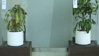 Der Video-Beweis: Ausschnitte aus dem Mobbing-Experiment von Ikea.