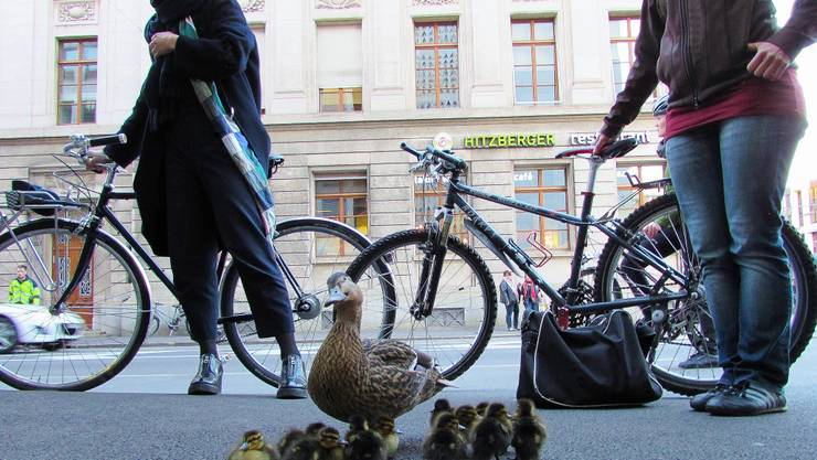 Am Mittwochabend wollte eine Entenfamilie in Basel den Aeschenplatz überqueren.