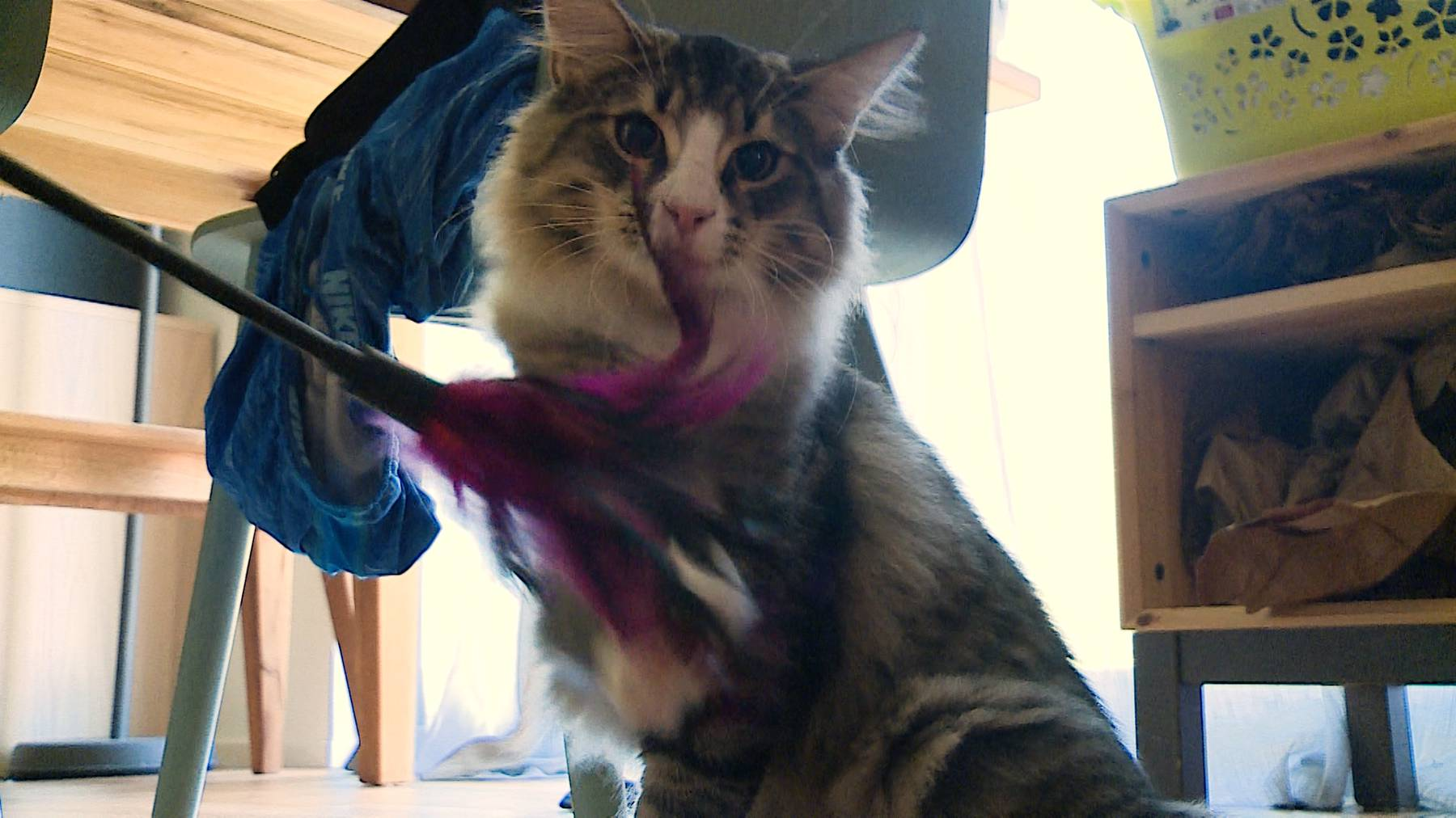 Ein Kitten zieht ein
