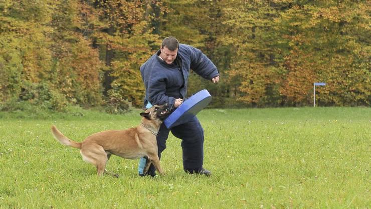 In Bottmingen fand die jährliche Polizeihundeprüfung statt.