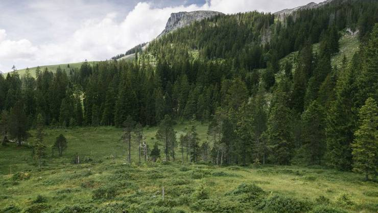Moorlandschaften wie hier unter der Schrattenfluh im Entlebuch LU sind Lebensräume von nationaler Bedeutung und müssen besser geschützt werden. Darin sind sich Umweltschutzorganisationen und das BAFU einig. (Archiv)
