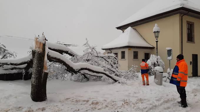 Auf dem Badener Kirchplatz ist ein Baum umgeknickt