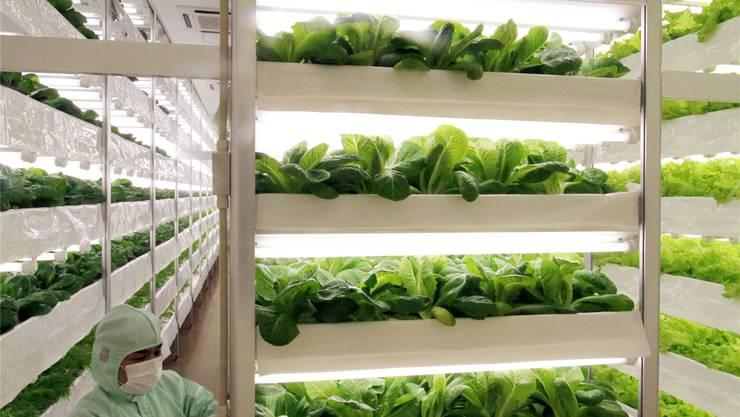 Dieser Salat erblickt nie das Licht des Tages. Schmecken tut er trotzdem.Haruyoshi Yamaguchi/ Getty Images