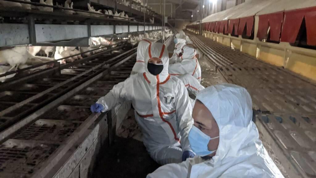 14 Aktivisten verzeigt nach Eierfarm-Besetzung in Eptingen BL