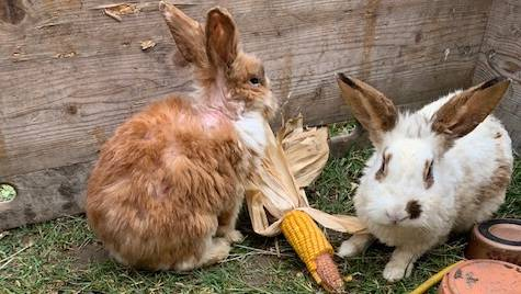 Die Kaninchen wurden am letzten Freitag in Kloten ausgesetzt.