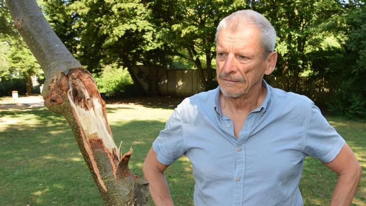 «Wer macht so etwas?» Peter Haudenschild begutachtet den Schaden an der jungen Linde beim Schöneggplatz.