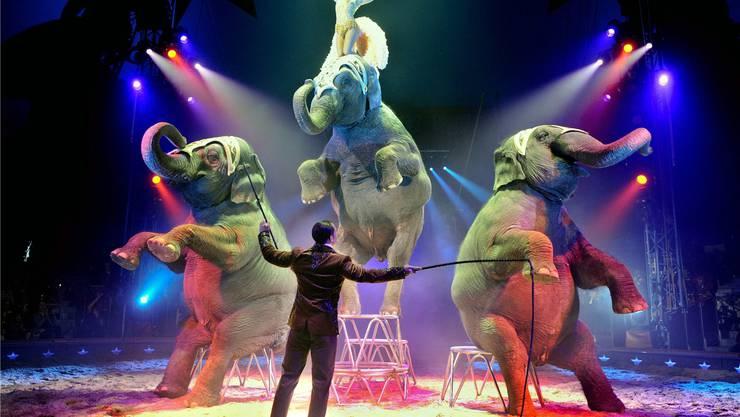 Künftig muss das Zirkuspublikum auf die beliebten Elefantennummern verzichten. Dafür können die Dickhäuter im Kinderzoo besucht werden.WALTER BIERI/Keystone