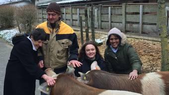 Qual der Wahl: Die Jurymitglieder Margarete Gelzer, Markus Dettwiler, Nayla Dettwiler und Sarah-Jane (von links) gehen auf Tuchfühlung mit den beiden einjährigen Schweinebrüdern.