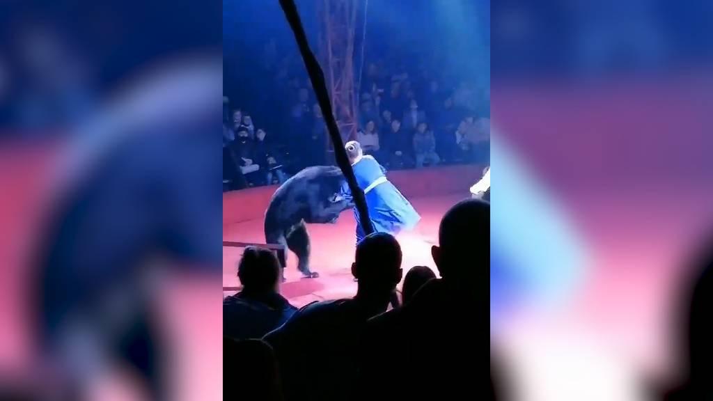 Bei Vorstellung in russischem Zirkus: Bär greift Trainerin an