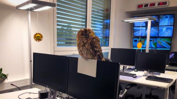 Die Kantonspolizei St.Gallen hat einen neuen «Mitarbeiter»