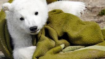 Der Eisbär als Markenzeichen des Berliner Zoos (Archivbild)